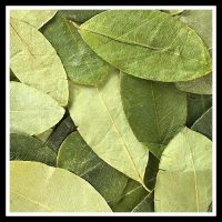 leaves square